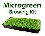 Seeds For Africa Microgreen Growing Kit Incl Seeds Growing Tray & Growing Medium