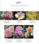 Otterley Press Rose Card Series