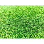 Seagull Industries Artificial Grass 10MM Pile Height